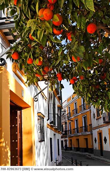 Orange Tree and Street, Seville, Spain